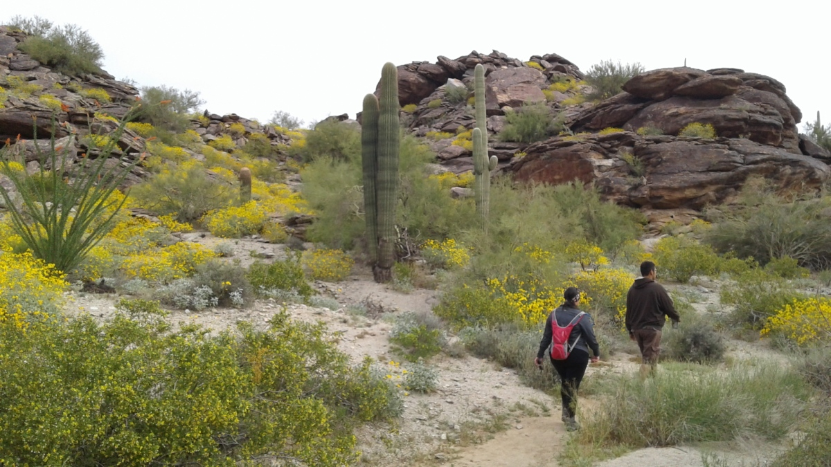 America's Largest City Park: South Mountain in Phoenix
