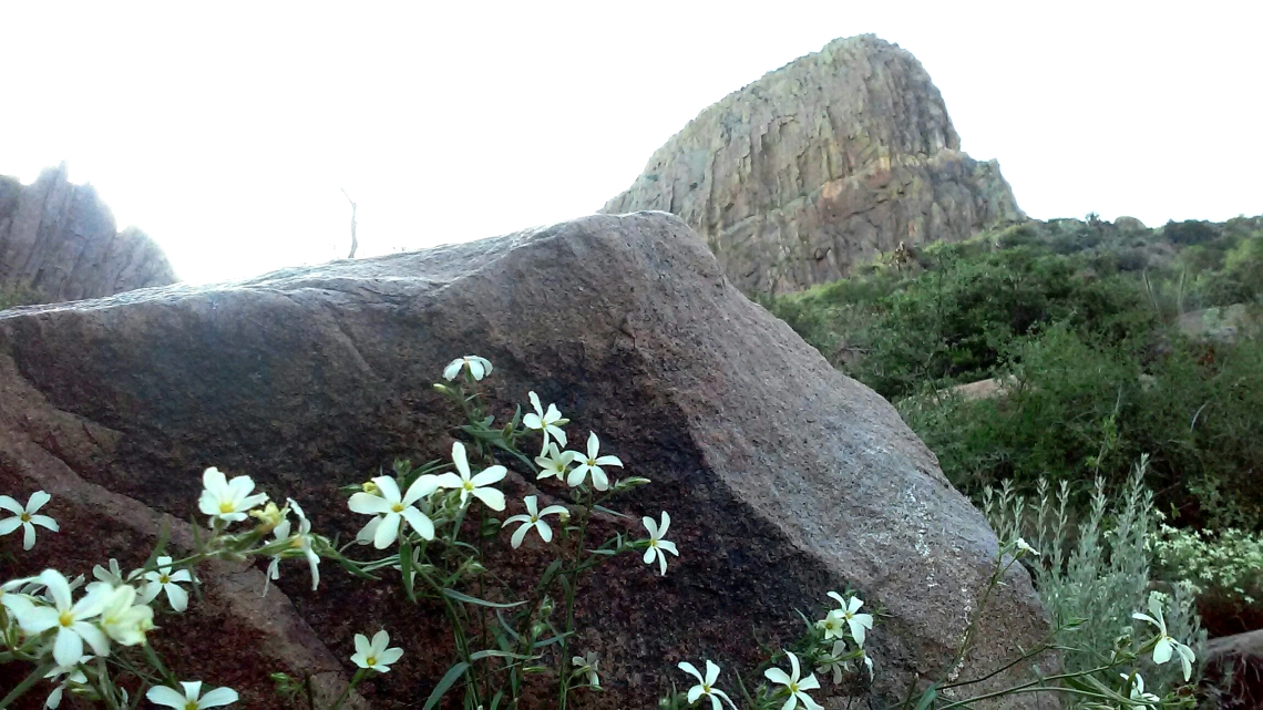 Springtime flowers bloom at foot of The Flatiron in Superstition Mountains.