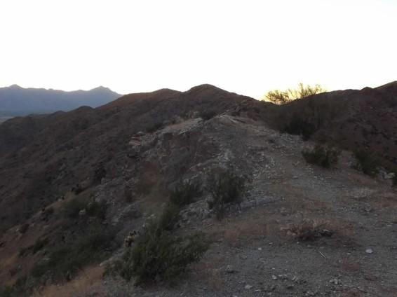 Bursera-sunset