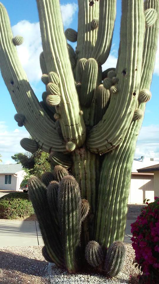 Cactus-Group-Hug