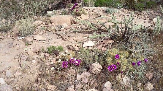 Superstition-flowers-10