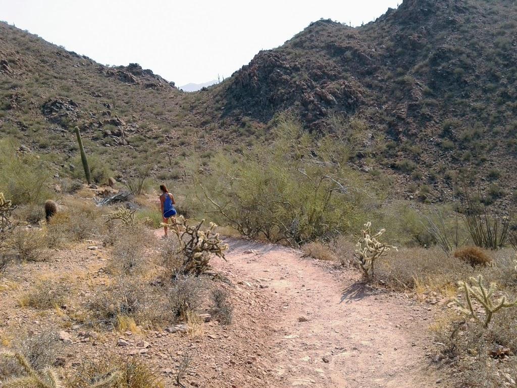 Hiking trail winding through desert cholla plants
