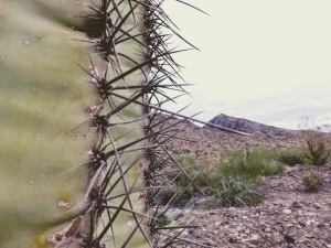 Saguaro-up-close.jpg