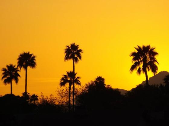 Bright orange sunrise with silhouette of palm trees