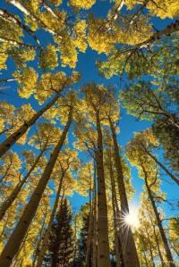 Lockett-Meadow-Aspens