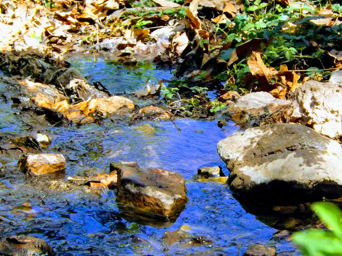 Spring-fed creek at Tonto National Monument