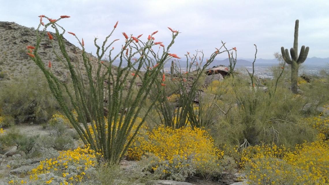 blooming flowers in the desert